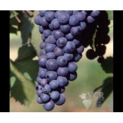 Sada vín Dolcetto