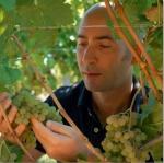 Přivezli jsme pro Vás: vinařství Castellari-Bergaglio - vína Gavi DOCG