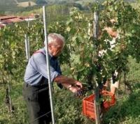 Nová vína v naší nabídce: La Ca Nova a Osvaldo Barberis